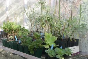Pépinière botanique au Lavandou