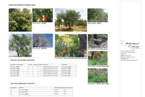 180° Sud, étude de jardin paysagé