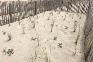 Réaménagement de la plage de Pampelonne à Ramatuelle