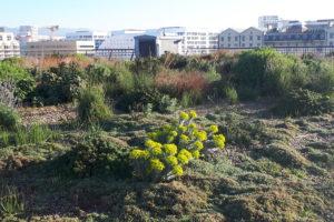 Le jardin des Terrasses du Port, à Marseille